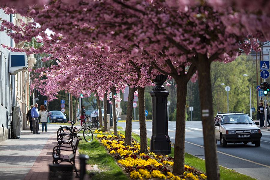 Nagykanizsa virágos Fő utca