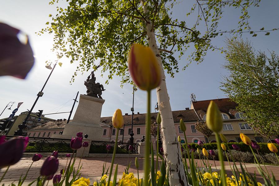 Tulipánok Kanizsán