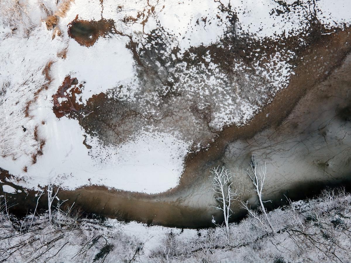 Drónfoto - Tájkép két fával - Kovács Krisztián